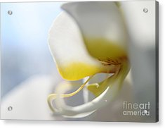 Orchid Melody  Acrylic Print