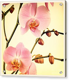 Orchid Old Photo Acrylic Print