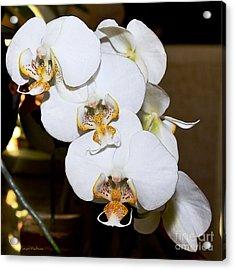 Orchid Phalaenopsis Dutch Lady Acrylic Print by Susan Wiedmann
