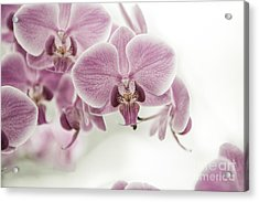 Orchid Pink Vintage Acrylic Print by Hannes Cmarits