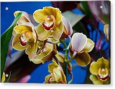 Orchid Pt 1 Acrylic Print by Heidi  Kleva