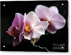 Acrylic Print featuring the photograph Orchid by Randi Grace Nilsberg