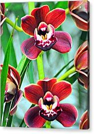 Orchid Rusty Acrylic Print by Marty Koch