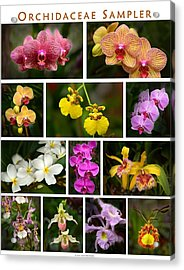 Orchid Sampler Acrylic Print