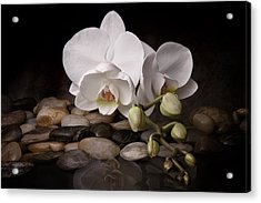 Orchid - Sensuous Virtue Acrylic Print