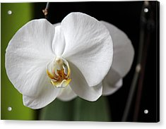 Acrylic Print featuring the photograph Orchid by Silke Brubaker