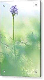Orchid Acrylic Print by Simona Ghidini