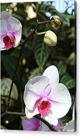 Orchid Three Acrylic Print by Mark Steven Burhart