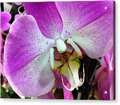 Orchid Throat Acrylic Print by Lyn Pacific
