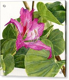 Orchid Tree Square Design Acrylic Print