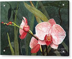 Acrylic Print featuring the painting Orchid Trio 2 by Barbara Jewell