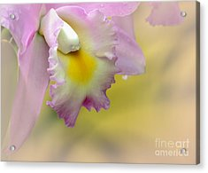 Orchid Whisper Acrylic Print