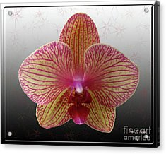 Acrylic Print featuring the photograph Orchid  With Stars by Donna Brown