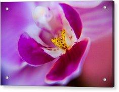 Orchide Detail Acrylic Print by Kim Lagerhem