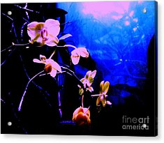 Acrylic Print featuring the photograph Orchidia by Vanessa Palomino