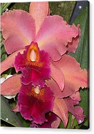 Orchids 4 Acrylic Print