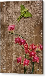 Orchids And Butterfly Acrylic Print by John Haldane