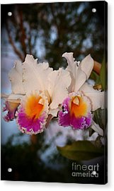 Orchid Elsie Sloan Acrylic Print by The Art of Alice Terrill
