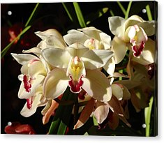 Orchids Acrylic Print by Glenn McCarthy Art and Photography