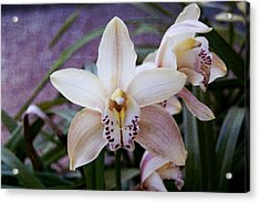 Orchids Acrylic Print by Heather Provan
