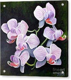 Orchids II Acrylic Print by Debbie Hart