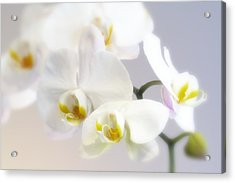 Orchids In The Mist Acrylic Print