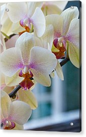Orchids In The Morning Light Acrylic Print