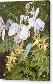 Orchids Acrylic Print by Marian Emma Chase