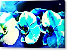 Acrylic Print featuring the mixed media Orchids Of Ranetta by Michelle Dallocchio