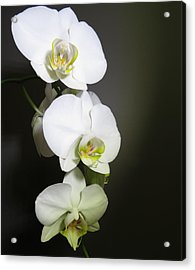 Orchids On Gray Acrylic Print
