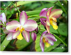 Orchids Acrylic Print by Rosemary Aubut