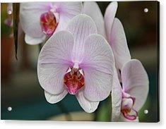 Orchids - Us Botanic Garden - 011312 Acrylic Print by DC Photographer