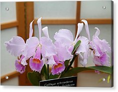 Orchids - Us Botanic Garden - 011315 Acrylic Print by DC Photographer