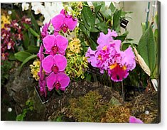Orchids - Us Botanic Garden - 011337 Acrylic Print by DC Photographer