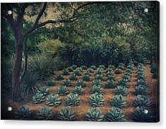 Order Acrylic Print by Laurie Search