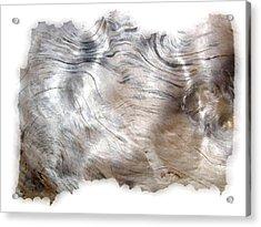 Oregon Driftwood Acrylic Print