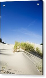 Oregon Dunes Acrylic Print by Charmian Vistaunet