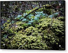 Oregon Forest Floor Acrylic Print