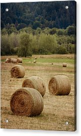 Oregon Hay Bales Acrylic Print by Carol Leigh
