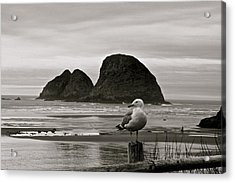 Oregon Shorebirds Acrylic Print