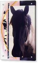 Acrylic Print featuring the photograph Oreo by Mary Ann  Leitch