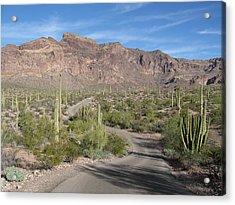 Organ Pipe Cactus National Monument Acrylic Print