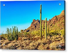 Organ Pipe Cactus National Monument Late Afternoon Acrylic Print by Bob and Nadine Johnston