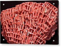 Organ Pipe Coral Acrylic Print by Dirk Wiersma