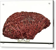 Organ Pipe Coral Specimen Acrylic Print by Ucl, Grant Museum Of Zoology