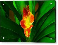 Organic Glowing Acrylic Print by Daniel Daniel