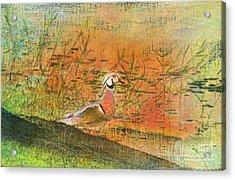 Oriental Duck Acrylic Print by Deborah Benoit