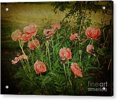 Oriental Poppies Acrylic Print by Rosemary Aubut