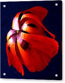 Oriental Poppy I Acrylic Print