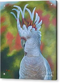 Original Animal Oil Painting Art -parrot #16-2-5-17 Acrylic Print